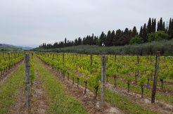 Splendida villa sul Lago di Garda con vigneto