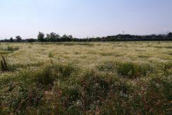 Interessante terreno agricolo, Zanica